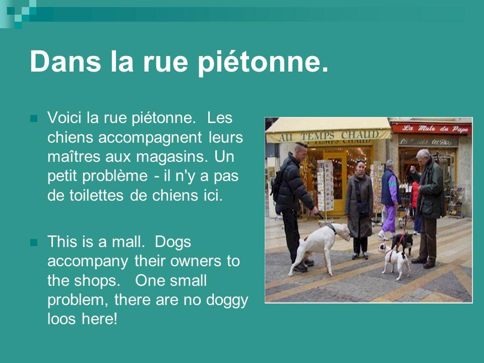 Dans la rue piétonne. Voici la rue piétonne. Les chiens accompagnent leurs maîtres aux magasins.