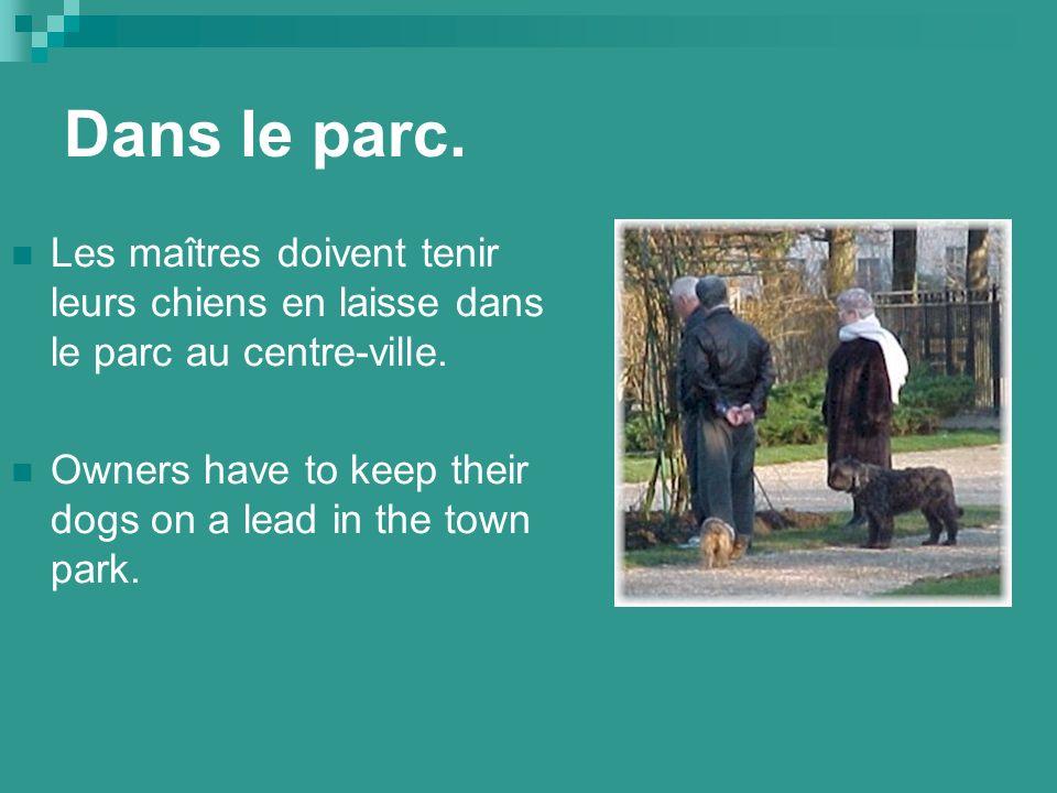 Dans le parc. Les maîtres doivent tenir leurs chiens en laisse dans le parc au centre-ville.