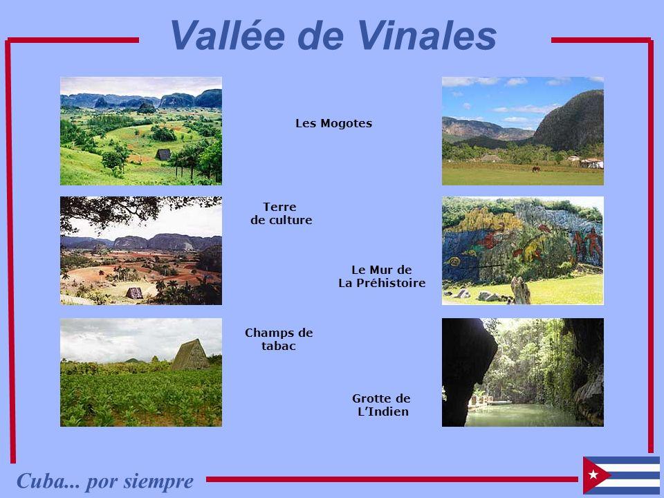 Les Mogotes Terre de culture Champs de tabac Grotte de LIndien Le Mur de La Préhistoire Cuba... por siempre Vallée de Vinales