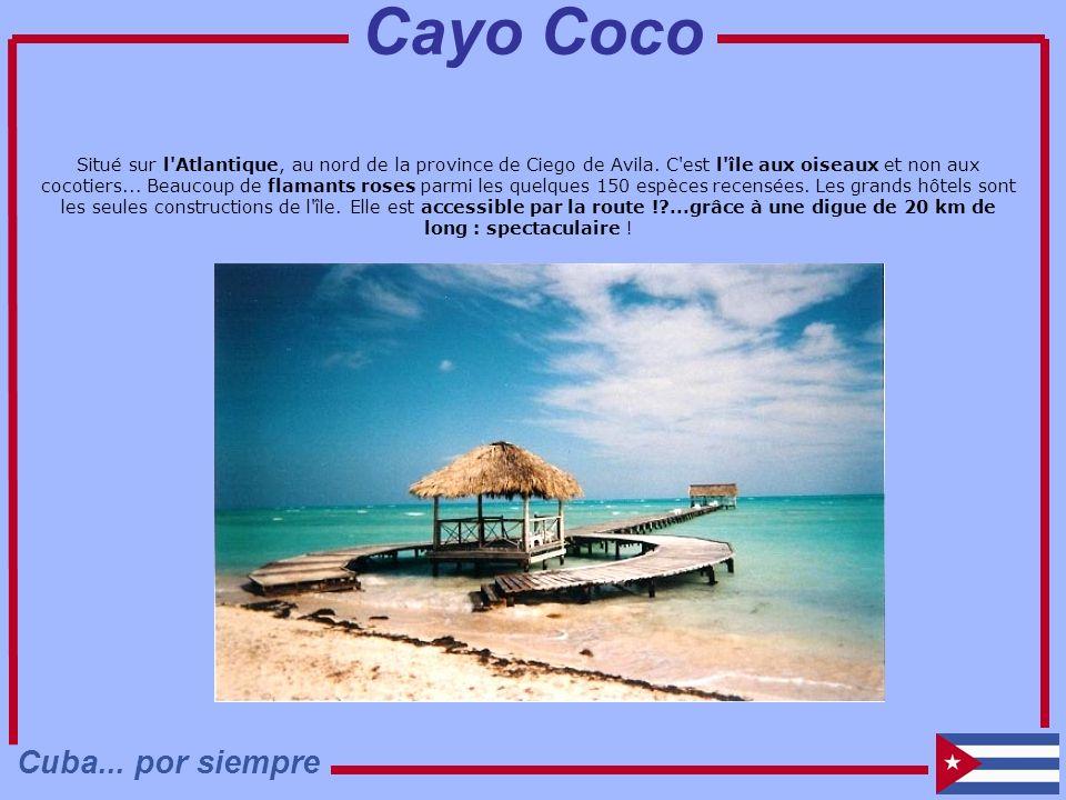 Situé sur l'Atlantique, au nord de la province de Ciego de Avila. C'est l'île aux oiseaux et non aux cocotiers... Beaucoup de flamants roses parmi les