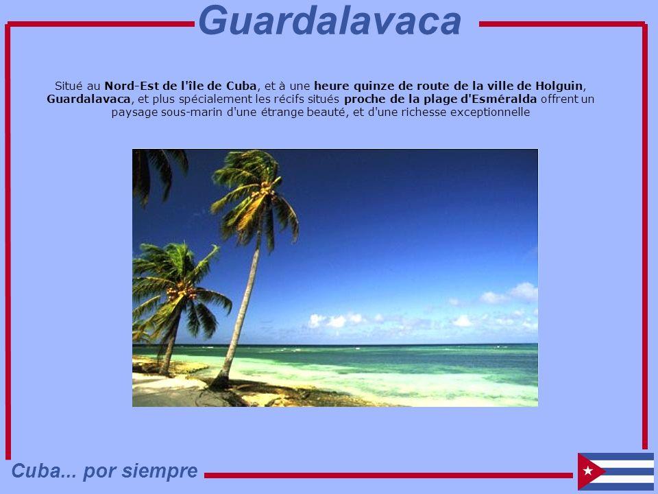Situé au Nord-Est de l'île de Cuba, et à une heure quinze de route de la ville de Holguin, Guardalavaca, et plus spécialement les récifs situés proche