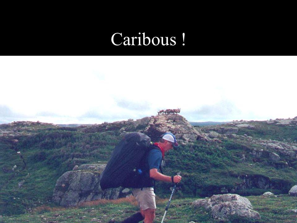 Caribous !