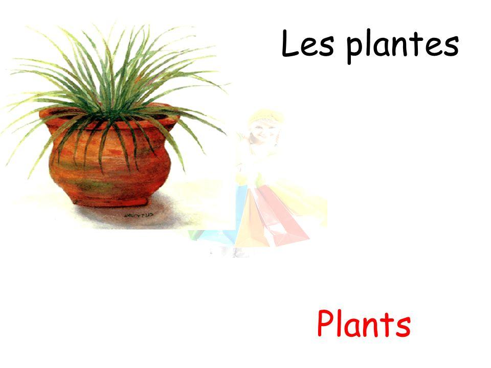 Les plantes Plants