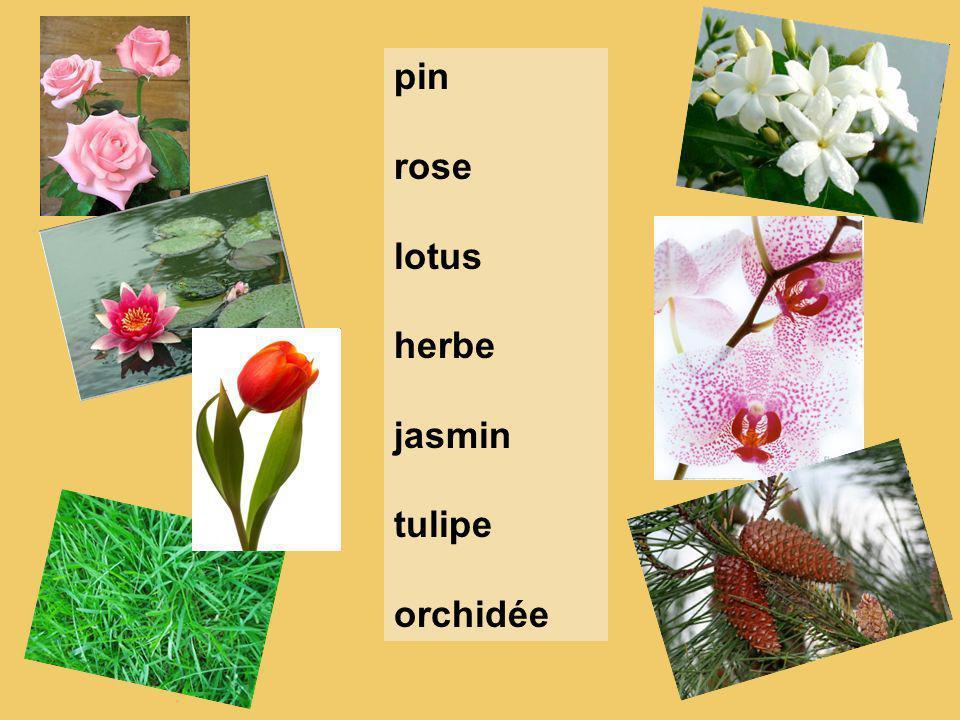 pin rose lotus herbe jasmin tulipe orchidée