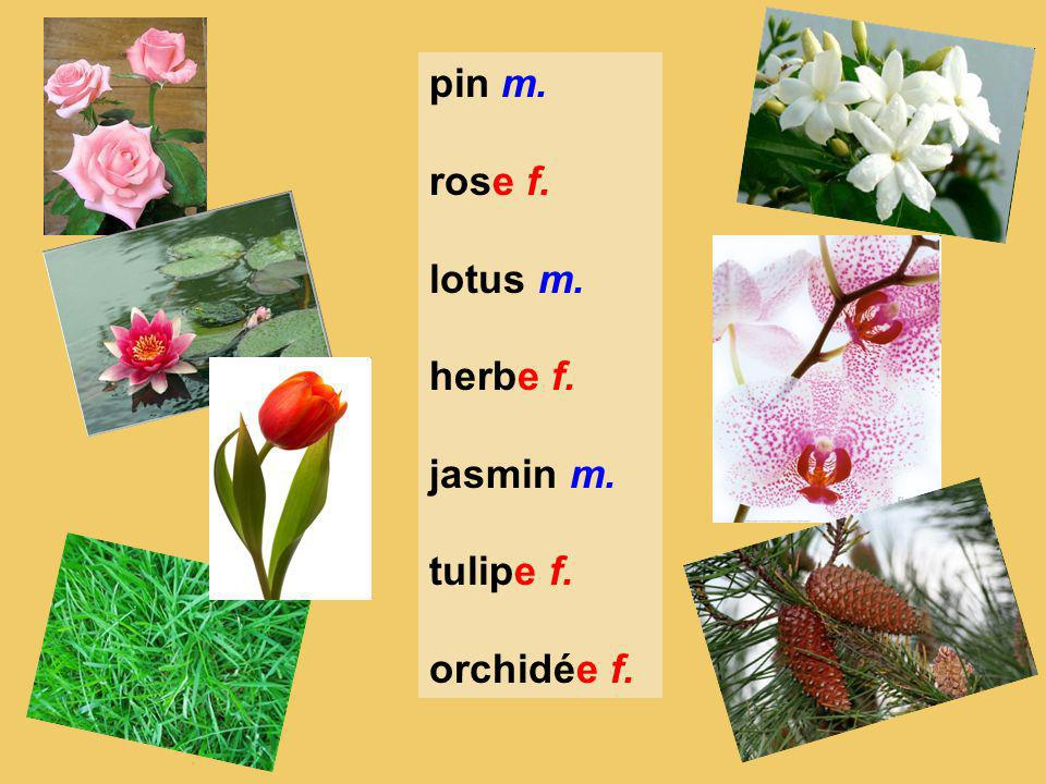 pin m. rose f. lotus m. herbe f. jasmin m. tulipe f. orchidée f.