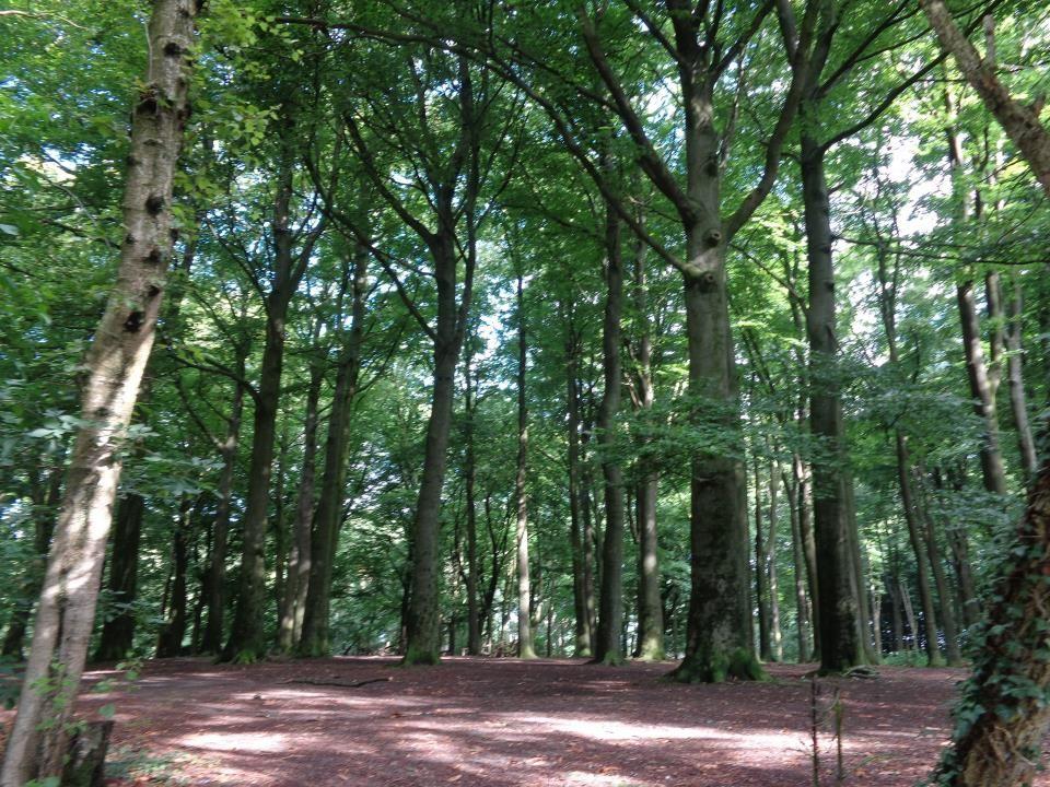 Une belle vue vers la verte campagne flamande