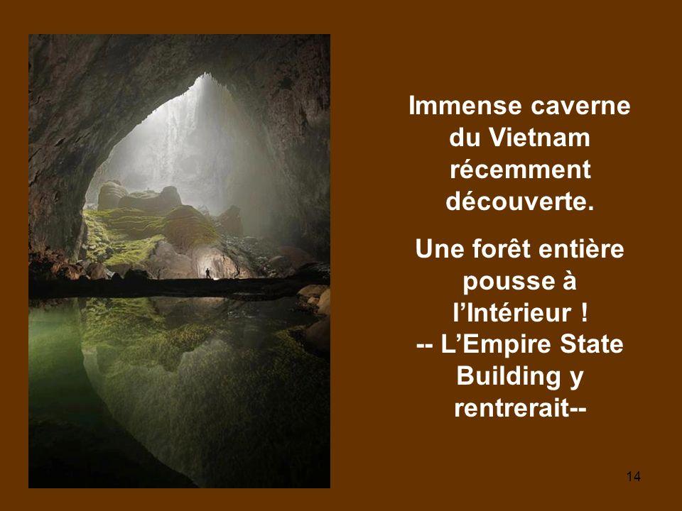 14 Immense caverne du Vietnam récemment découverte. Une forêt entière pousse à lIntérieur ! -- LEmpire State Building y rentrerait--
