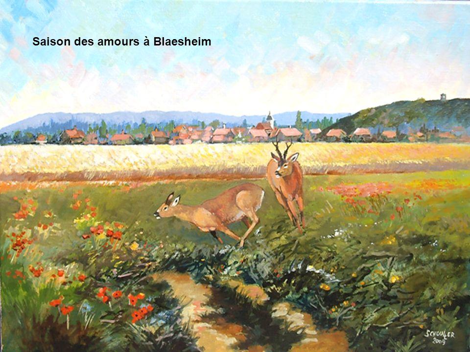 Saison des amours à Blaesheim