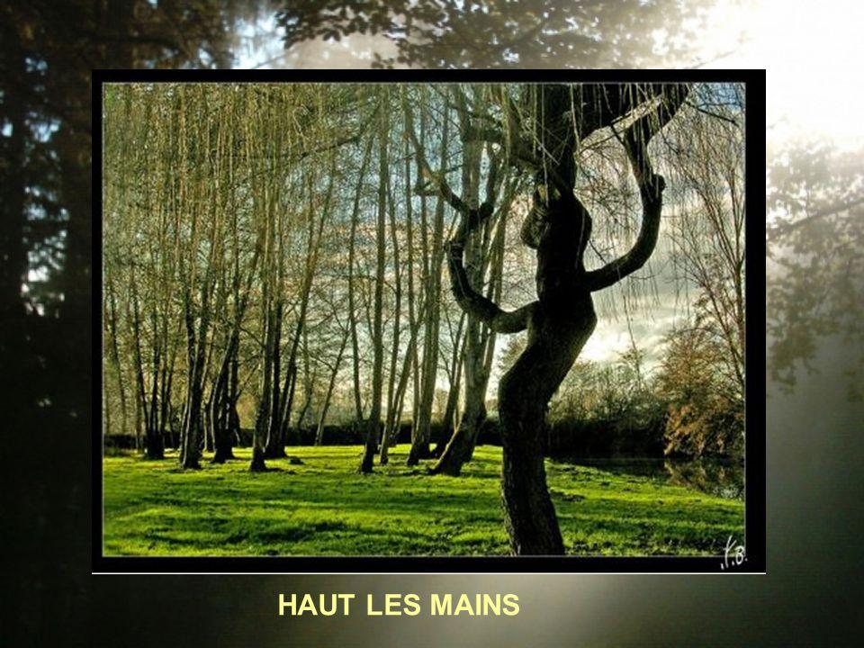 HAUT LES MAINS