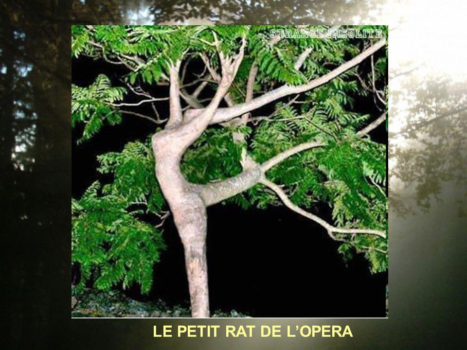 LE PETIT RAT DE LOPERA