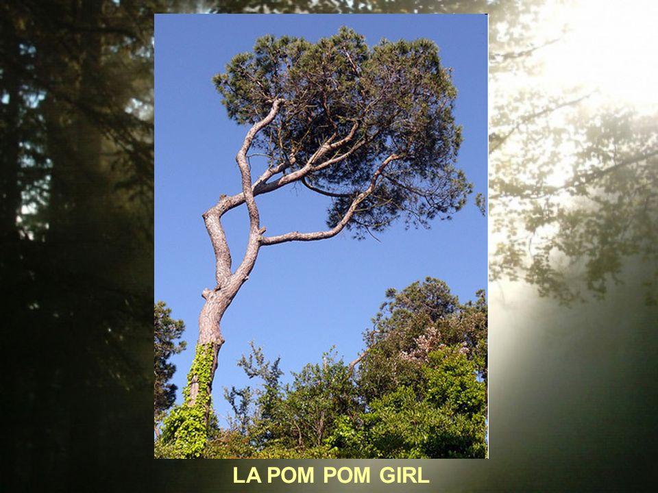 LA POM POM GIRL