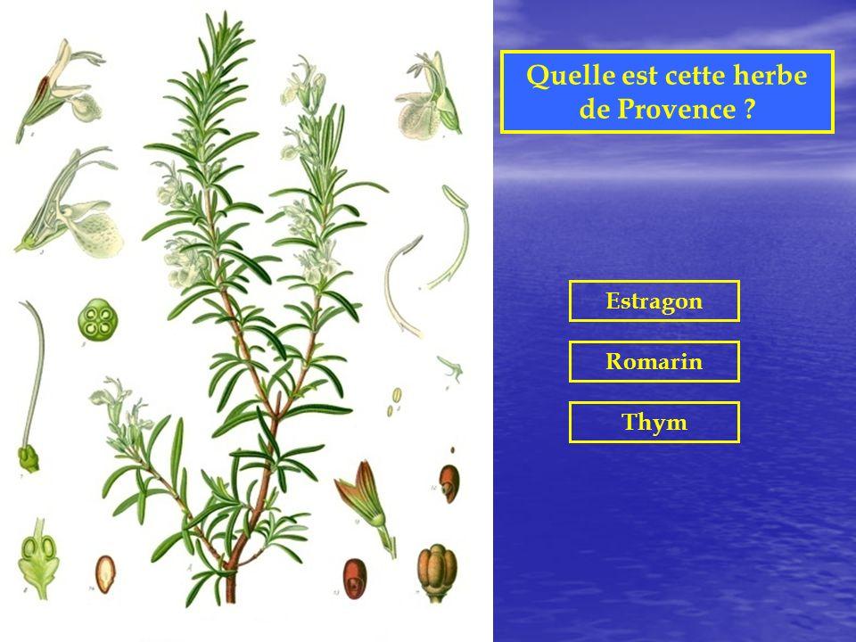Quelle est cette plante aromatique ? Basilic Estragon Laurier
