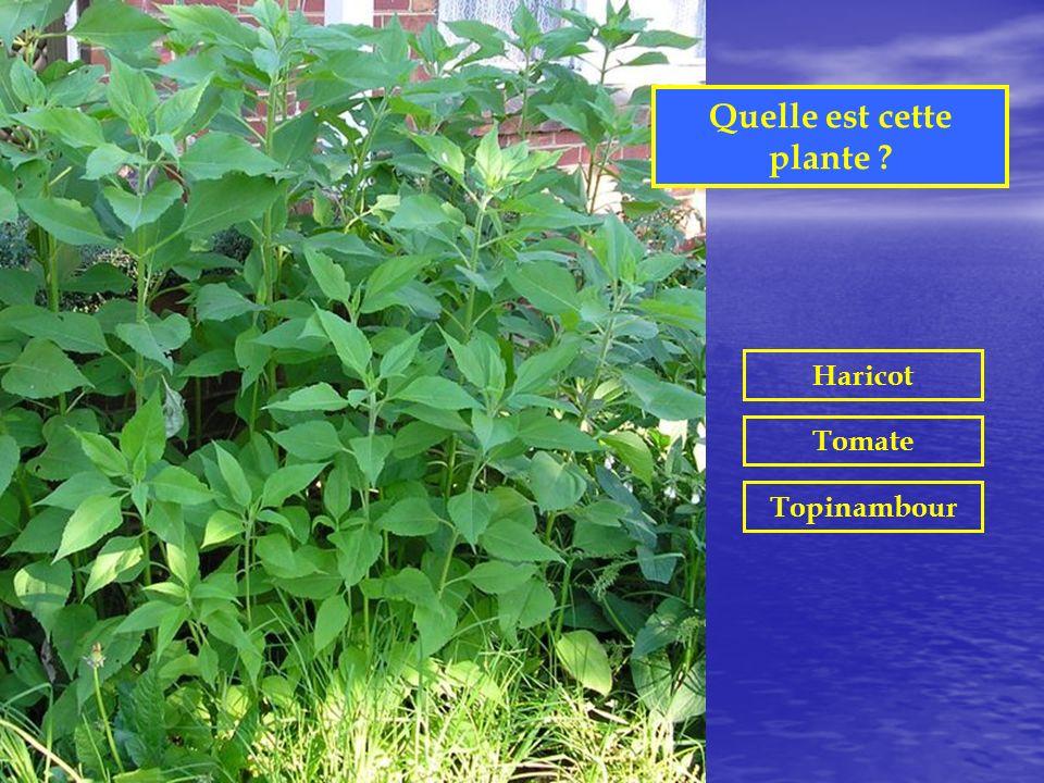 Dans quelle région de France produit-on la mimolette ? Alpes Bourgogne Nord Périgord