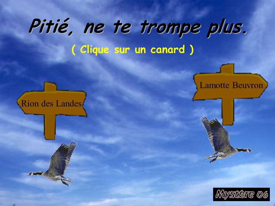 Pitié, ne te trompe plus. ( Clique sur un canard ) Rion des Landes Lamotte Beuvron