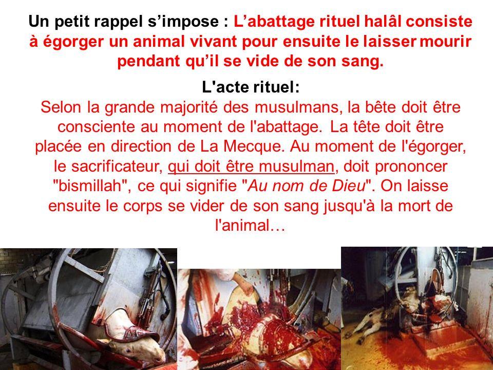 Un petit rappel simpose : Labattage rituel halâl consiste à égorger un animal vivant pour ensuite le laisser mourir pendant quil se vide de son sang.