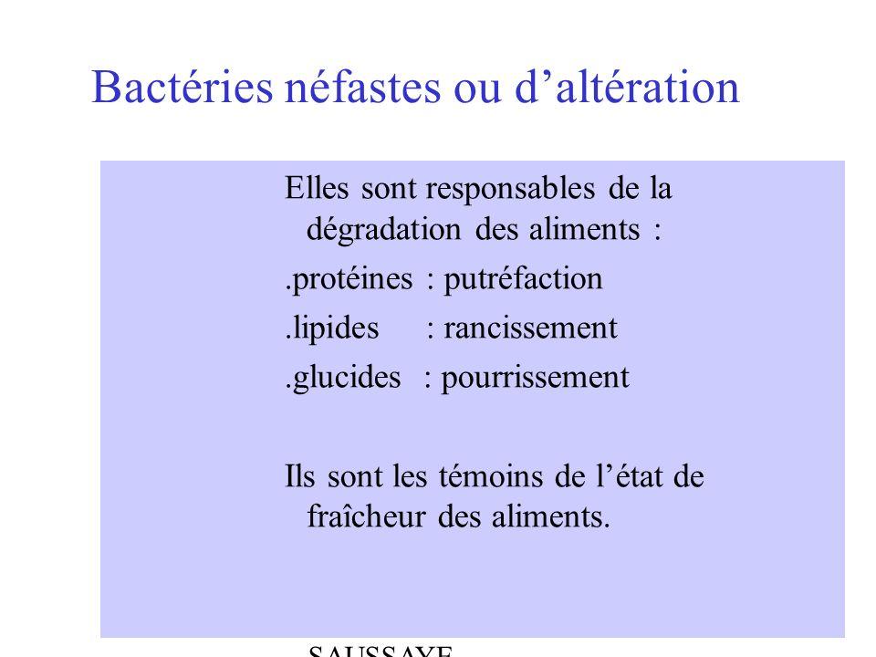 ABEL - BOULLOT - SAUSSAYE Bactéries néfastes ou daltération Elles sont responsables de la dégradation des aliments :.protéines : putréfaction.lipides