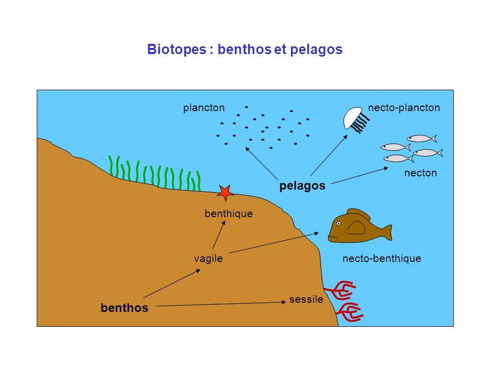 Biotopes : benthos et pelagos benthos pelagos planctonnecto-plancton necton necto-benthique benthique sessile vagile