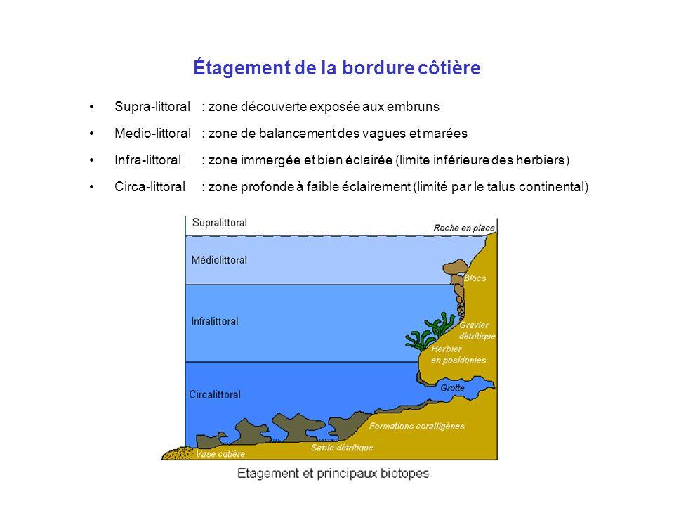 Étagement de la bordure côtière Supra-littoral: zone découverte exposée aux embruns Medio-littoral: zone de balancement des vagues et marées Infra-lit
