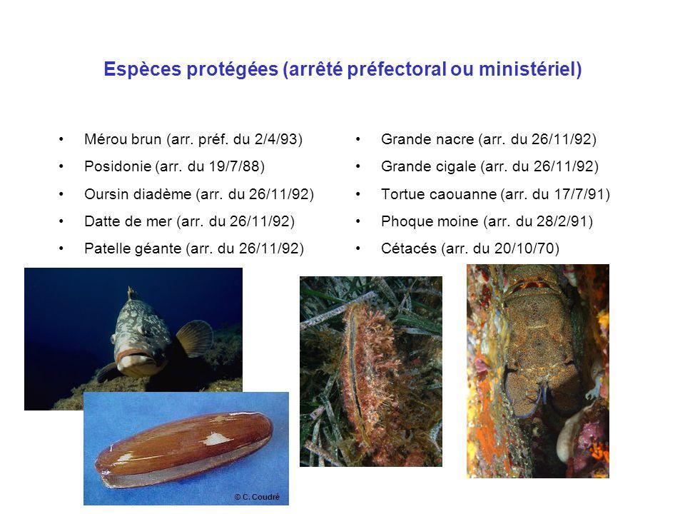 Espèces protégées (arrêté préfectoral ou ministériel) Mérou brun (arr. préf. du 2/4/93) Posidonie (arr. du 19/7/88) Oursin diadème (arr. du 26/11/92)