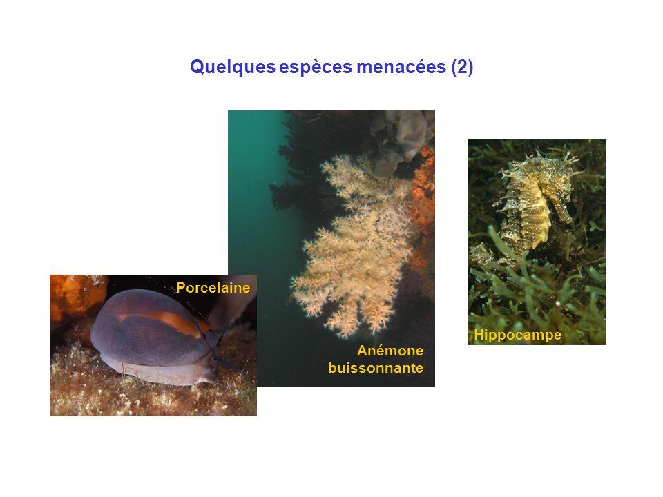 Quelques espèces menacées (2) Porcelaine Anémone buissonnante Hippocampe