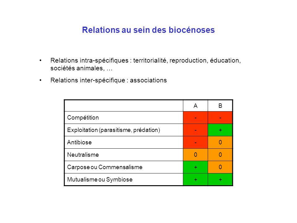 Relations au sein des biocénoses Relations intra-spécifiques : territorialité, reproduction, éducation, sociétés animales, … Relations inter-spécifiqu