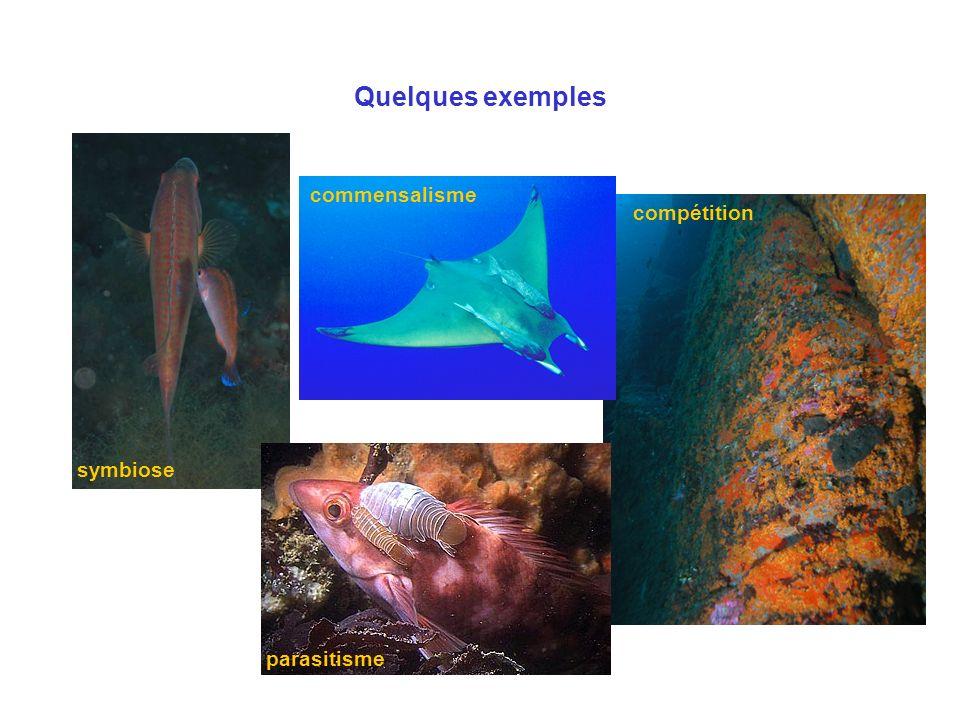 Quelques exemples symbiose compétition commensalisme parasitisme