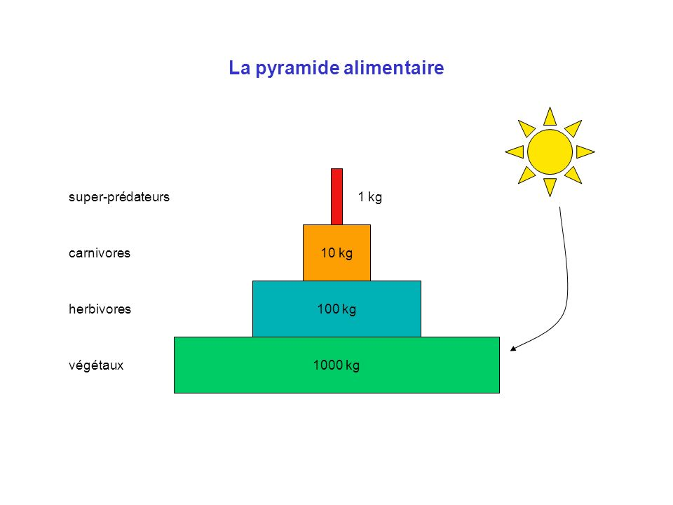 La pyramide alimentaire 1000 kg 100 kg 10 kg 1 kg végétaux herbivores carnivores super-prédateurs
