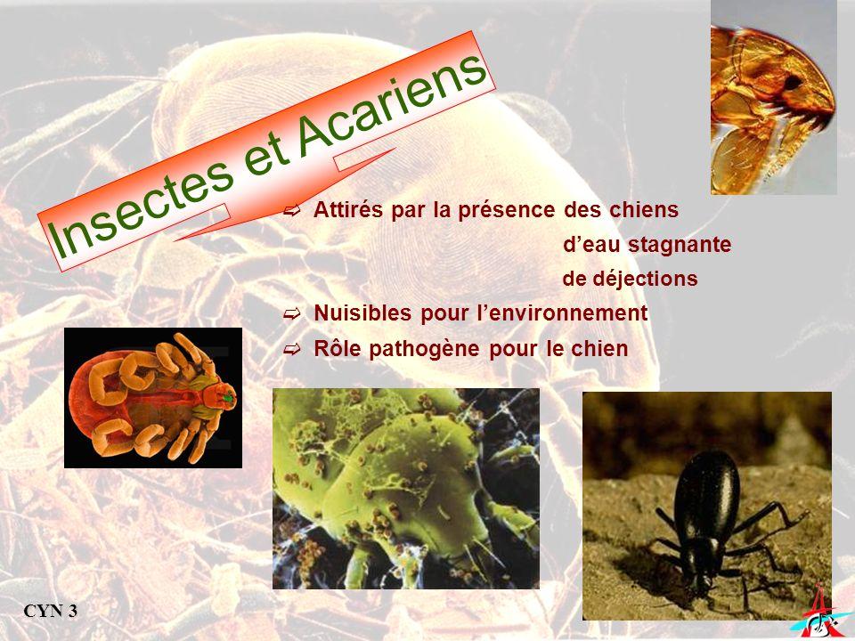 Insectes et Acariens Attirés par la présence des chiens deau stagnante de déjections Nuisibles pour lenvironnement Rôle pathogène pour le chien CYN 3