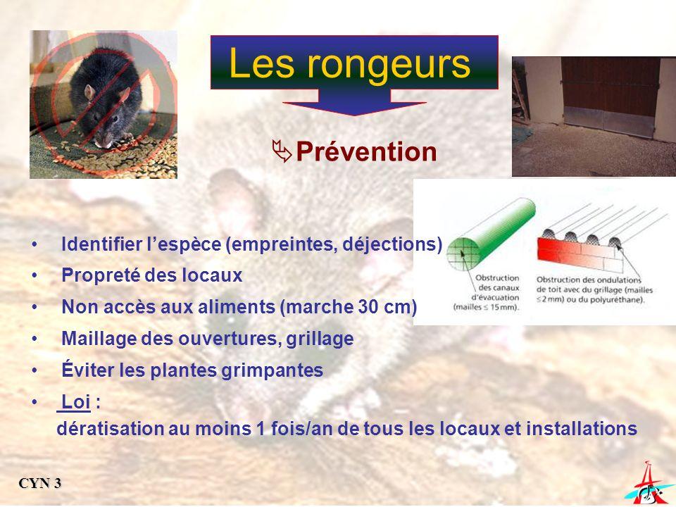 Les rongeurs Prévention Identifier lespèce (empreintes, déjections) Propreté des locaux Non accès aux aliments (marche 30 cm) Maillage des ouvertures,