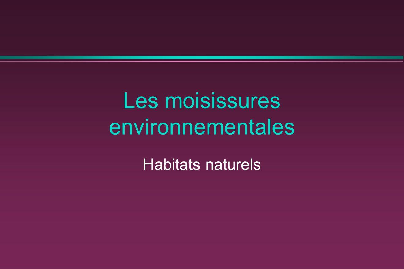 Les moisissures environnementales Habitats naturels