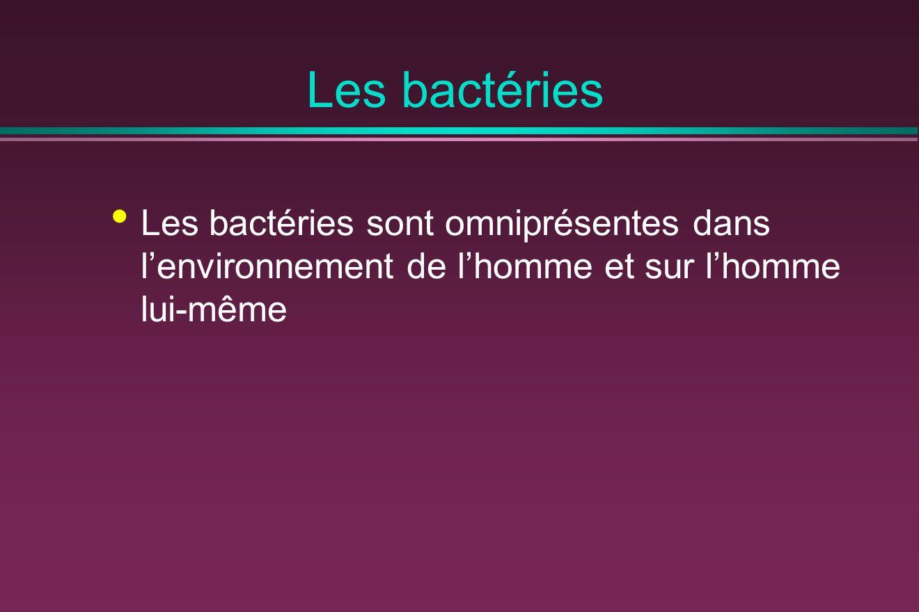 Les bactéries Les bactéries sont omniprésentes dans lenvironnement de lhomme et sur lhomme lui-même