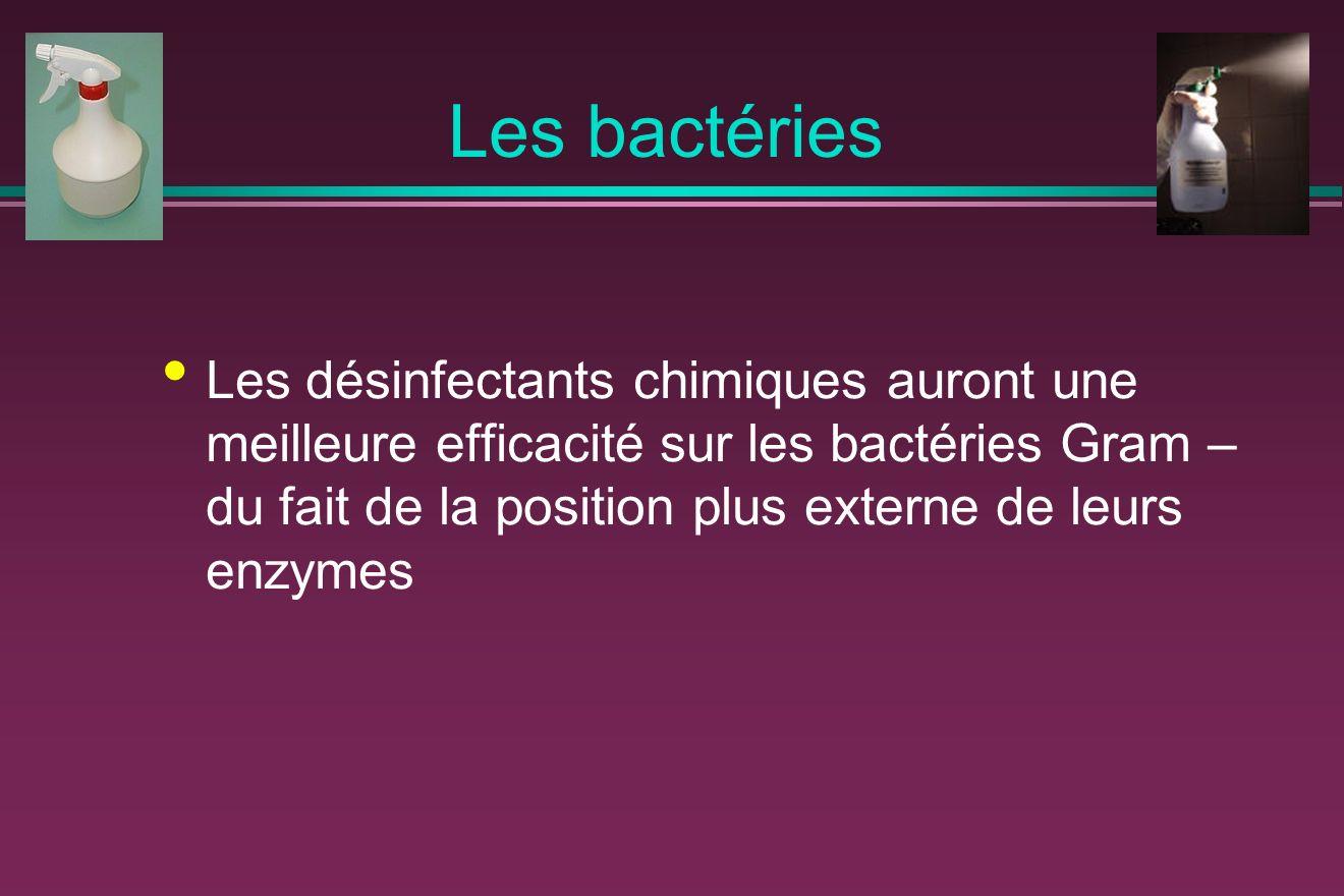 Les bactéries Les désinfectants chimiques auront une meilleure efficacité sur les bactéries Gram – du fait de la position plus externe de leurs enzyme