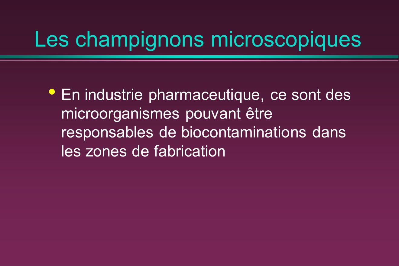 Les champignons microscopiques En industrie pharmaceutique, ce sont des microorganismes pouvant être responsables de biocontaminations dans les zones de fabrication
