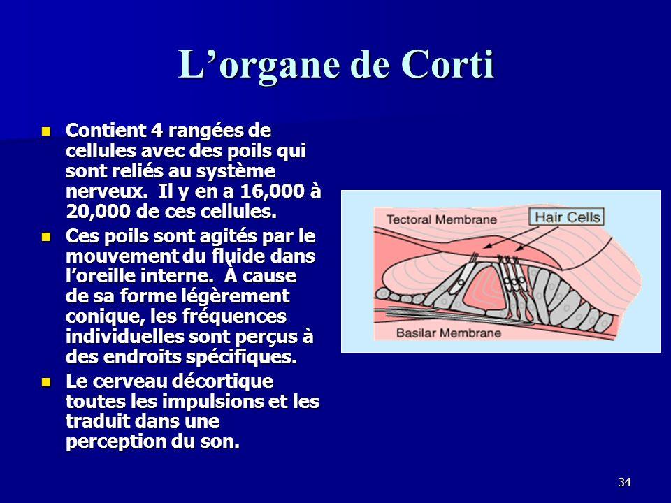 33 La structure de loreille interne Loreille interne ressemble en forme à un escargot.