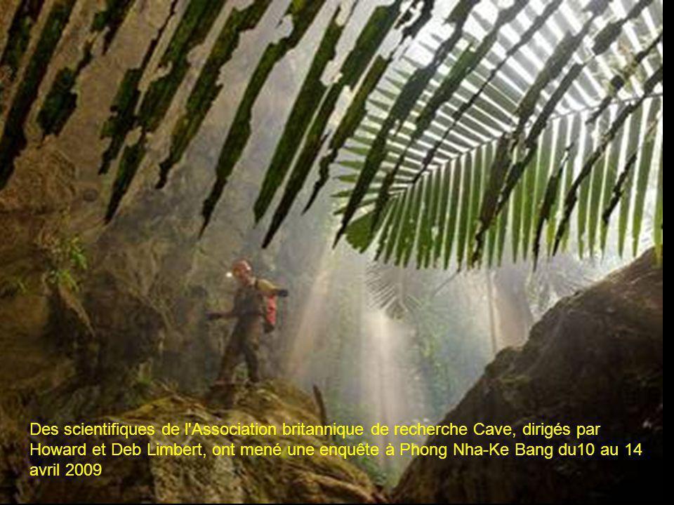A un quart de mile en dessous de la surface, une minie jungle dans la doline effondrée.