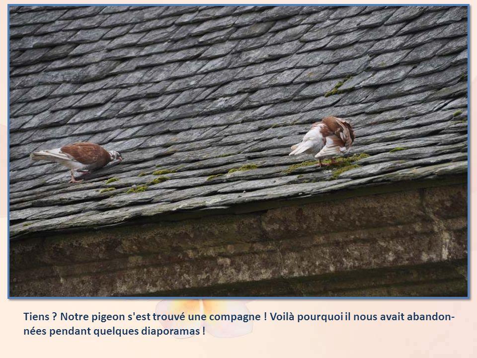 Tiens .Notre pigeon s est trouvé une compagne .
