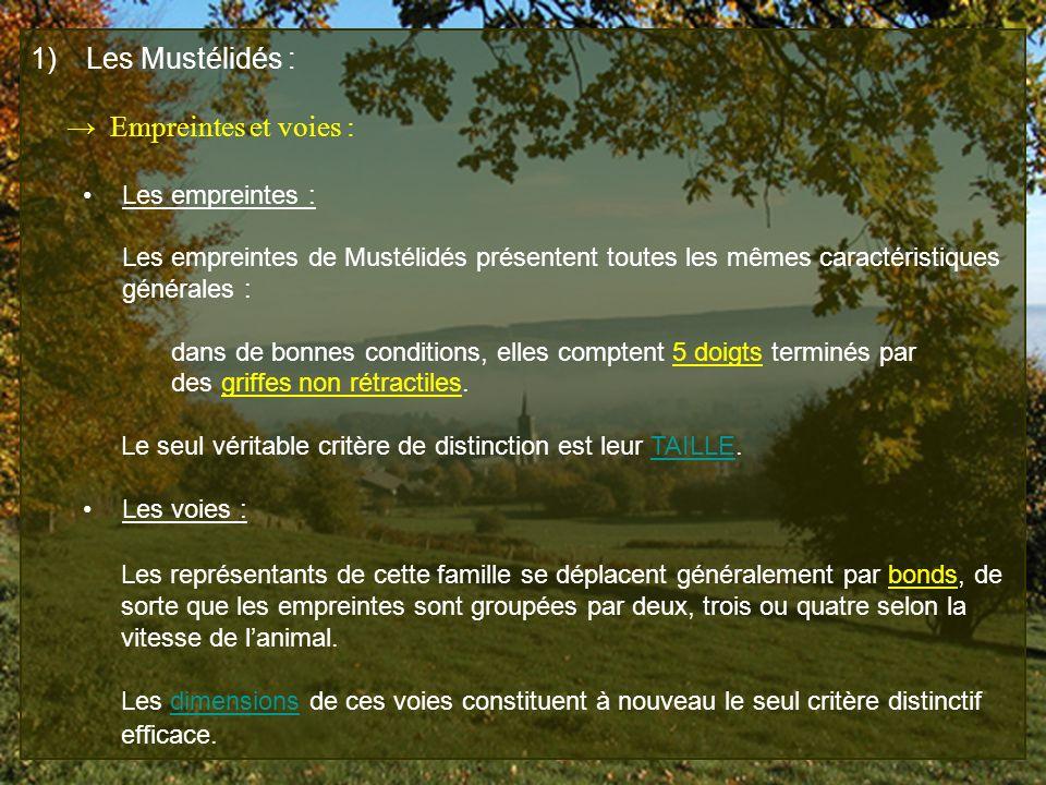 1) Les Mustélidés : Empreintes et voies : Les empreintes : Les empreintes de Mustélidés présentent toutes les mêmes caractéristiques générales : dans
