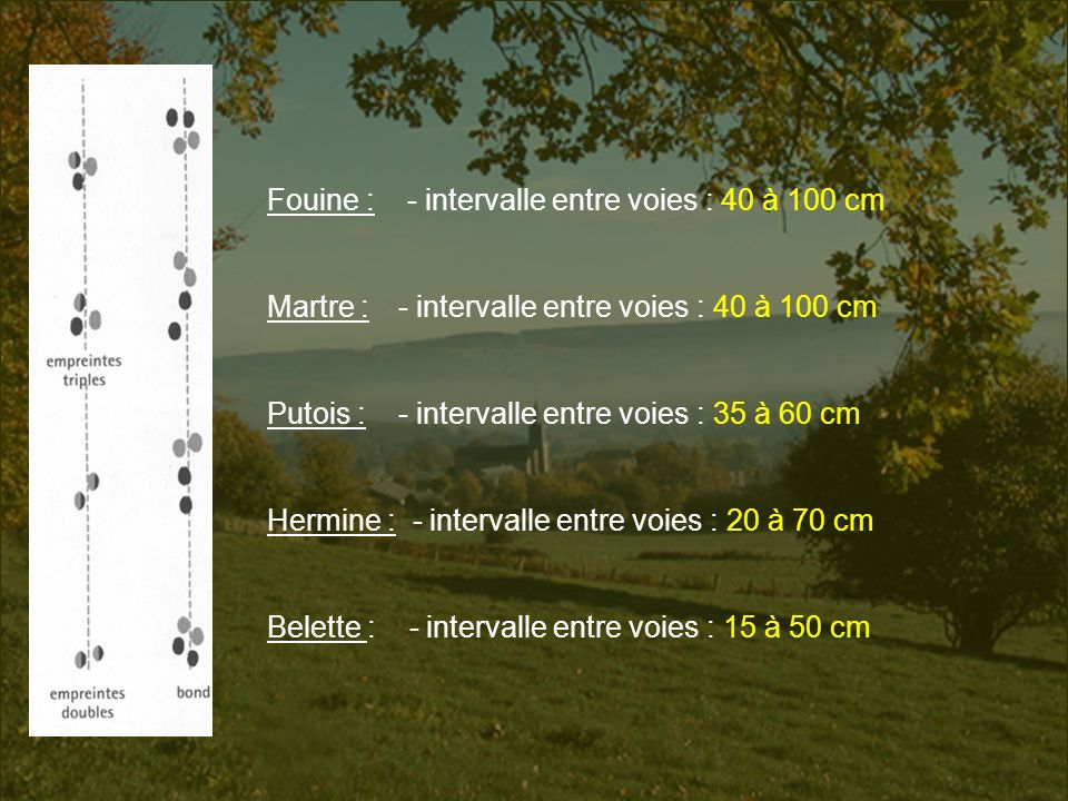 Fouine : - intervalle entre voies : 40 à 100 cm Martre : - intervalle entre voies : 40 à 100 cm Putois : - intervalle entre voies : 35 à 60 cm Hermine
