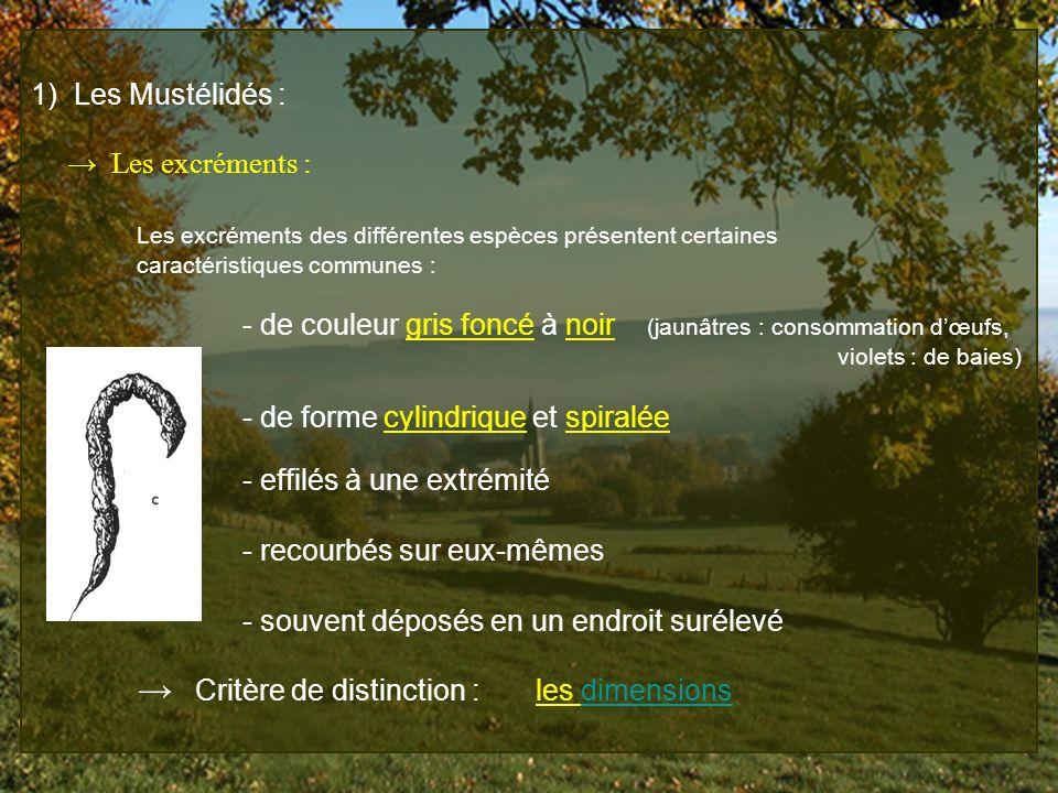 1) Les Mustélidés : Les excréments : Les excréments des différentes espèces présentent certaines caractéristiques communes : - de couleur gris foncé à