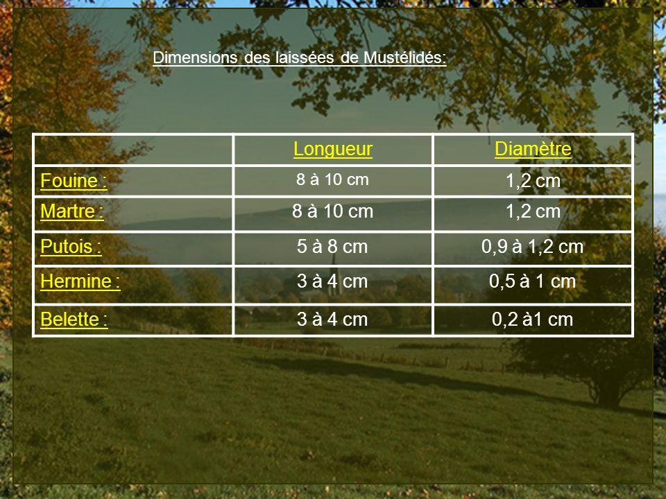 Dimensions des laissées de Mustélidés: LongueurDiamètre Fouine : 8 à 10 cm 1,2 cm Martre :8 à 10 cm1,2 cm Putois :5 à 8 cm0,9 à 1,2 cm Hermine :3 à 4