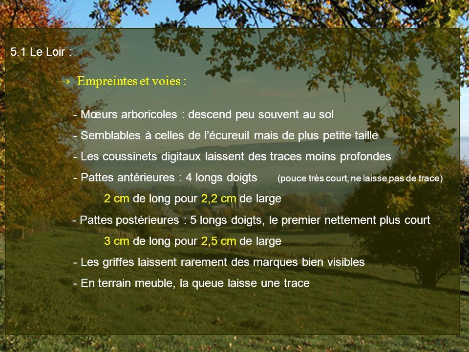 5.1 Le Loir : Empreintes et voies : - Mœurs arboricoles : descend peu souvent au sol - Semblables à celles de lécureuil mais de plus petite taille - L
