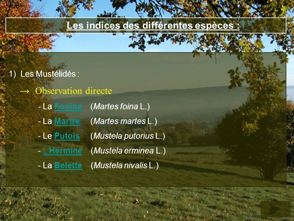Les indices des différentes espèces : 1) Les Mustélidés : Observation directe - La Fouine (Martes foina L.)Fouine - La Martre (Martes martes L.)Martre