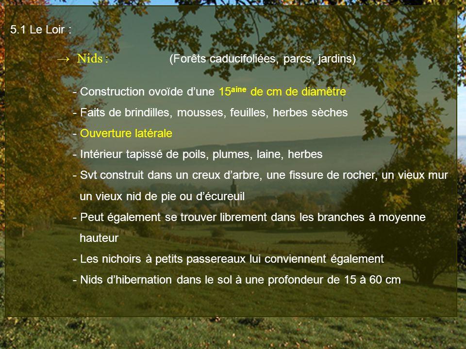 5.1 Le Loir : Nids : (Forêts caducifoliées, parcs, jardins) - Construction ovoïde dune 15 aine de cm de diamètre - Faits de brindilles, mousses, feuil