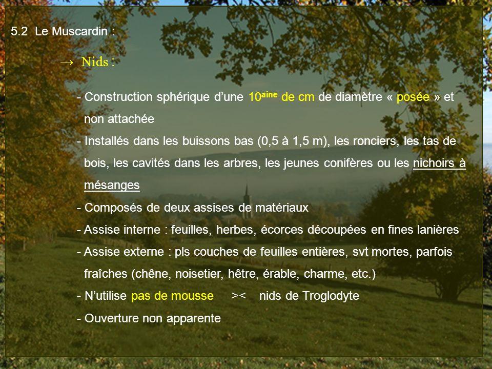 5.2 Le Muscardin : Nids : - Construction sphérique dune 10 aine de cm de diamètre « posée » et non attachée - Installés dans les buissons bas (0,5 à 1