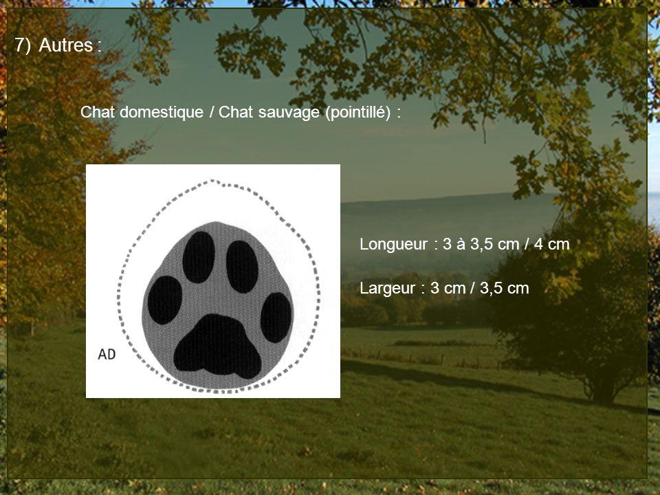 7)Autres : Chat domestique / Chat sauvage (pointillé) : Longueur : 3 à 3,5 cm / 4 cm Largeur : 3 cm / 3,5 cm