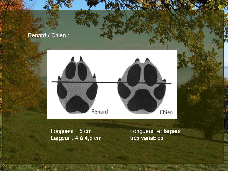 Renard / Chien : Longueur : 5 cm Longueur et largeur Largeur : 4 à 4,5 cm très variables