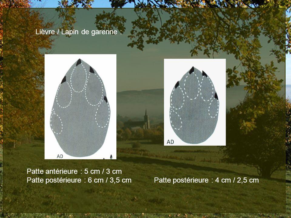 Lièvre / Lapin de garenne : Patte antérieure : 5 cm / 3 cm Patte postérieure : 6 cm / 3,5 cm Patte postérieure : 4 cm / 2,5 cm