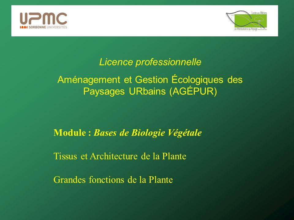 Licence professionnelle Aménagement et Gestion Écologiques des Paysages URbains (AGÉPUR) Module : Bases de Biologie Végétale Tissus et Architecture de la Plante Grandes fonctions de la Plante