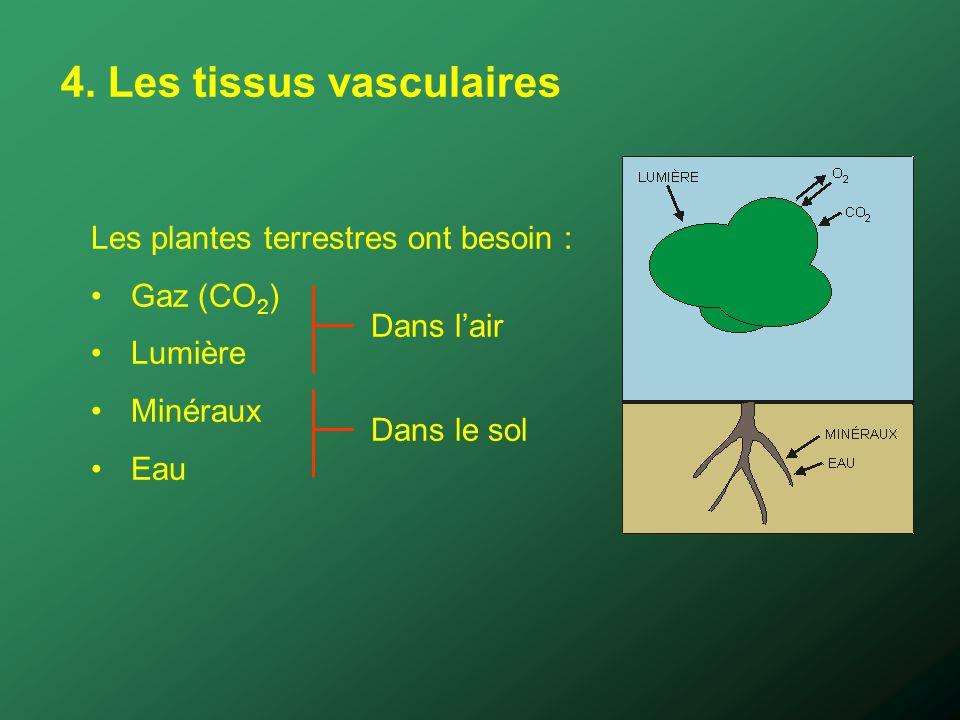4. Les tissus vasculaires Les plantes terrestres ont besoin : Gaz (CO 2 ) Lumière Minéraux Eau Dans lair Dans le sol