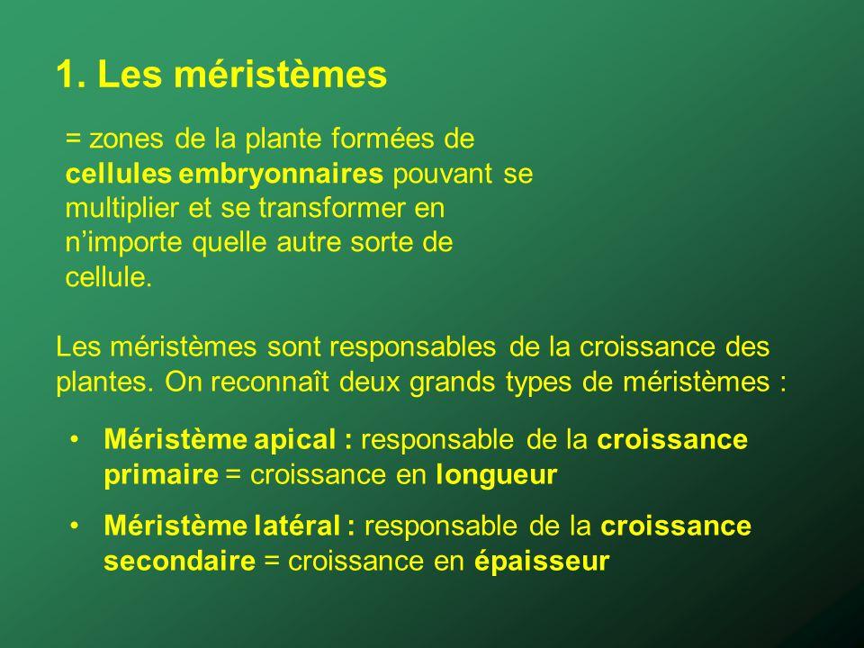 1. Les méristèmes = zones de la plante formées de cellules embryonnaires pouvant se multiplier et se transformer en nimporte quelle autre sorte de cel